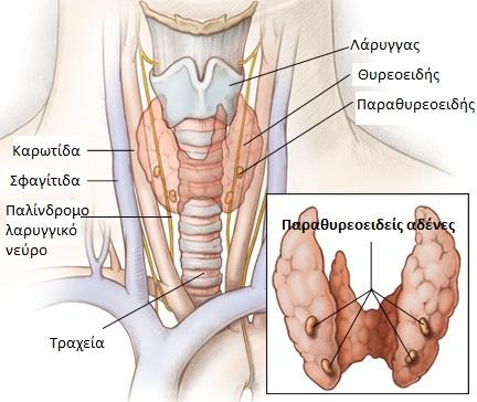 Χειρουργική παραθυρεοειδών αδένων